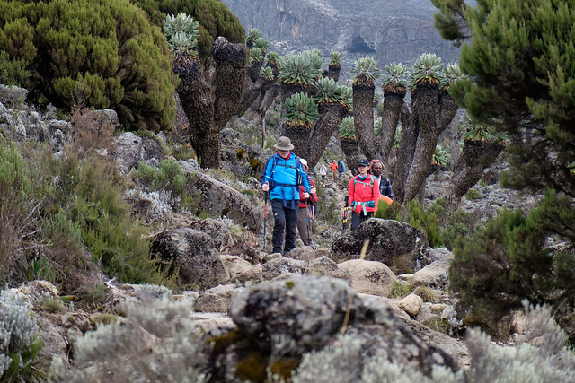 Kilimanjaro - Blog-12