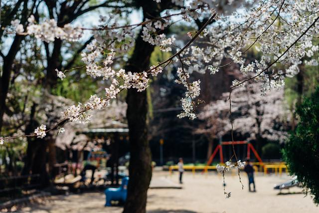 Sakura05_55mm