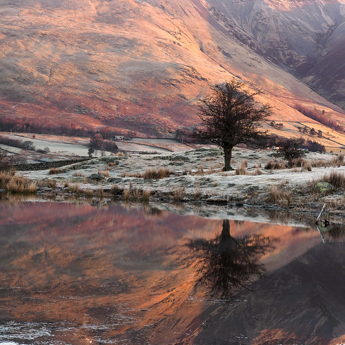 Tewet tarn tree reflection 2 | by Alf Branch