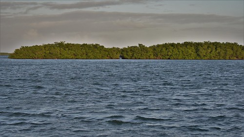 mangrove sainterose basseterre guadeloupe