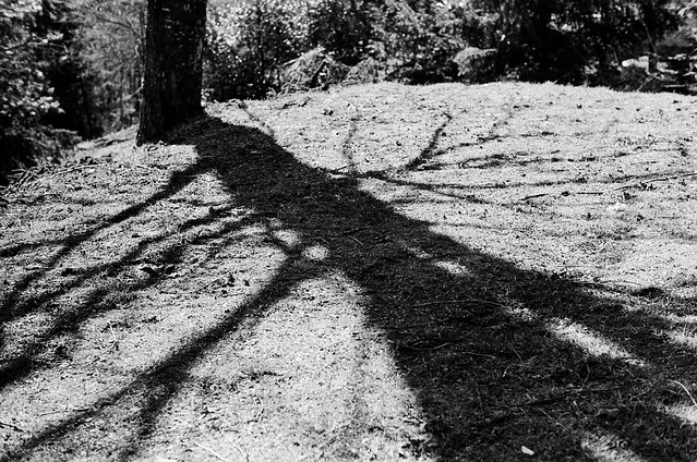 Shadow of an Ent