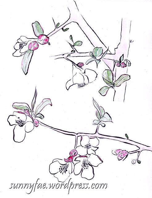 Quince Blossom Sketch
