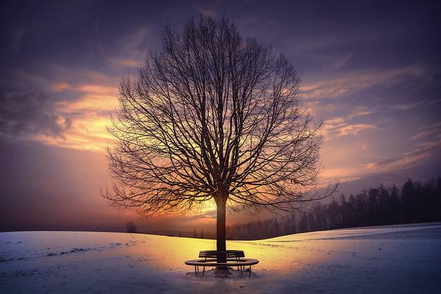around a tree