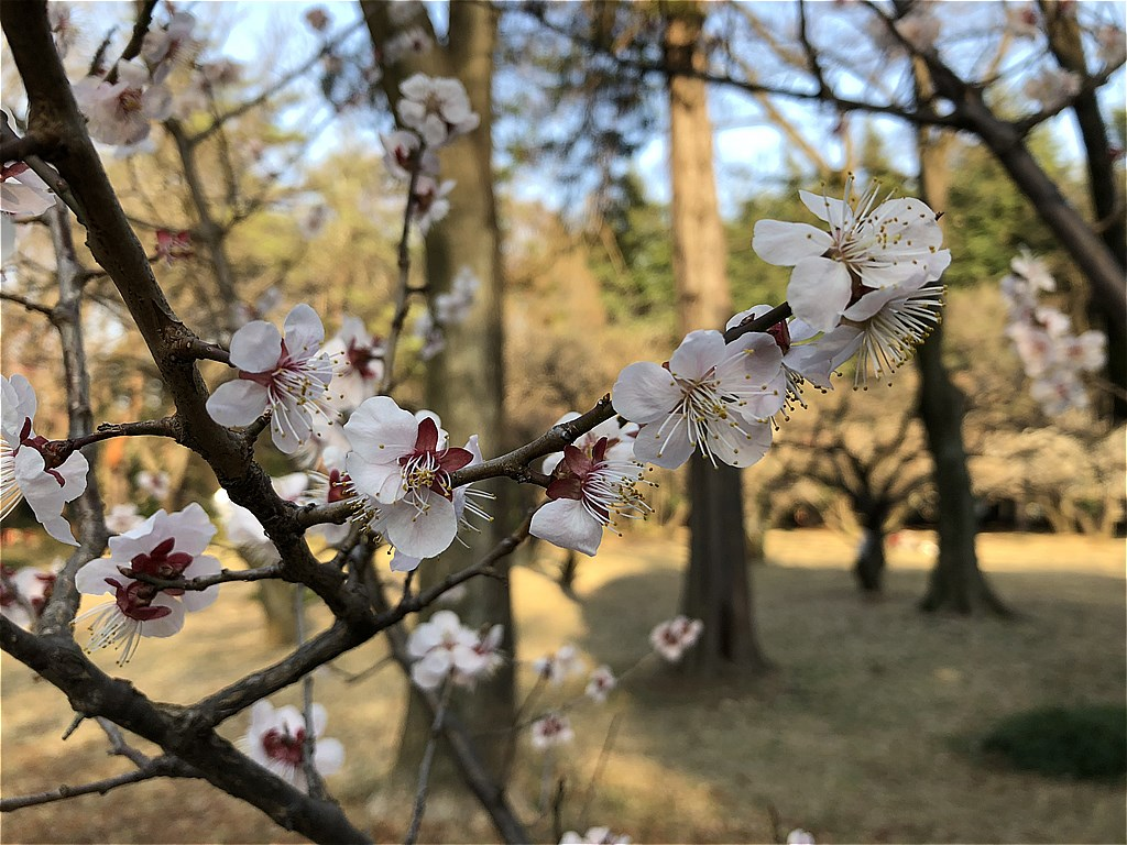 20180317_光ヶ丘 (2)