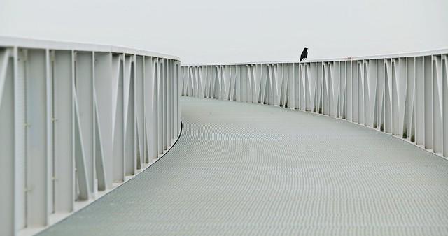 Black Bird on White Banister