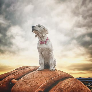 My cinnamon girl... sitting on top of a hill looking over Thousand Oaks on top of a gigantic baseball mitt... down the rabbit hole 🐾💕🐾 | by Alex Beattie
