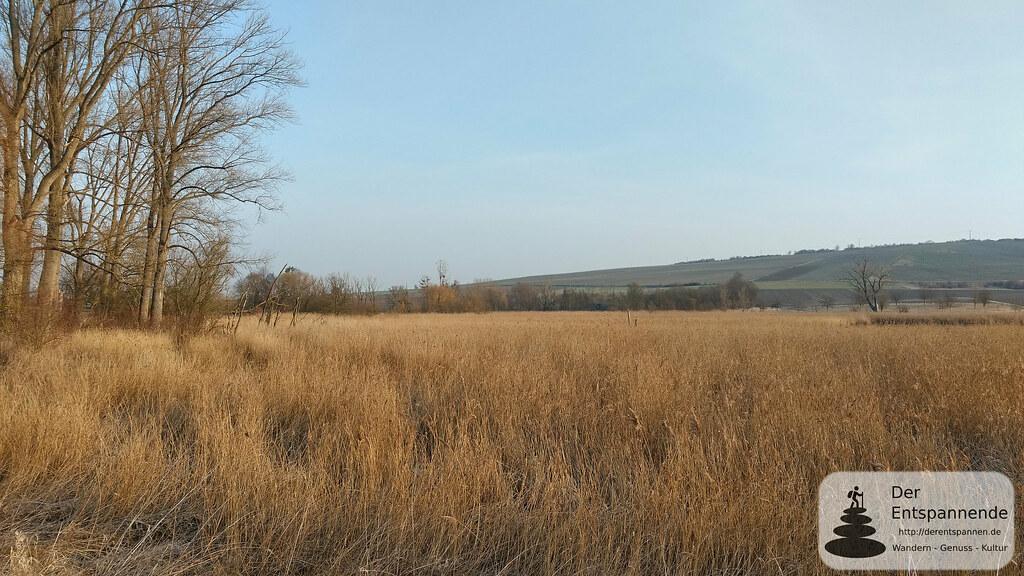 Hahnheimer Bruch im Selztal