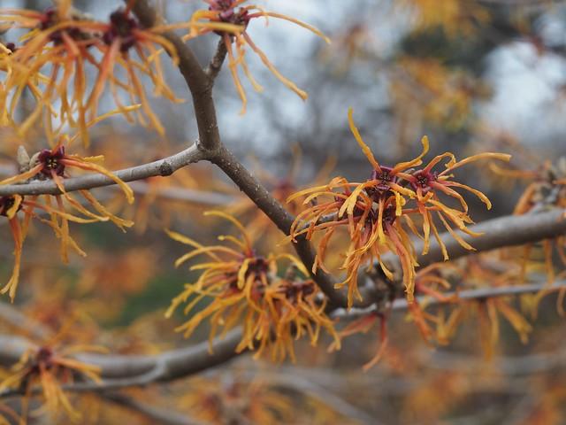 Sat, 2018-02-24 13:00 - Brooklyn Botanic Garden
