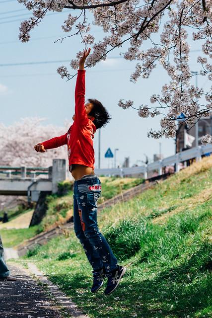 CherryBlossoms_84