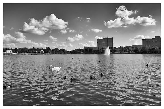 Swan Lakeland