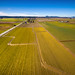 Skagit Valley Daffodil Field from Above