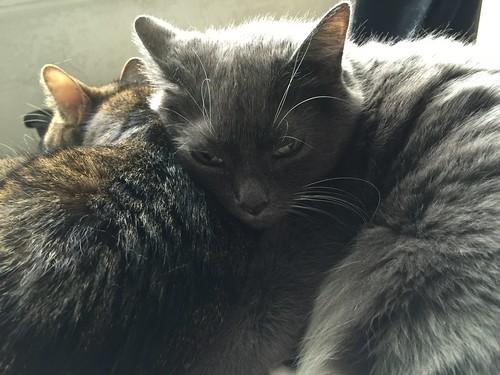 Caesar & Zoe