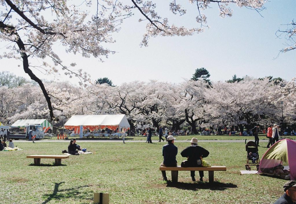 2018-03-30 小金井公園の桜 002