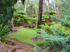 10 April 2018 - Tranquil tree ferns lining one of the streams that meander through the delightful scenery in Araluen Botanic Park, Roleystone, Perth, Western Australia, Australia