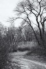East Pond Trail - Winter
