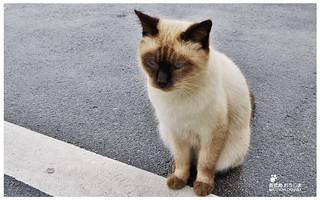 貓島(奧武島)中本鮮魚天婦羅-2