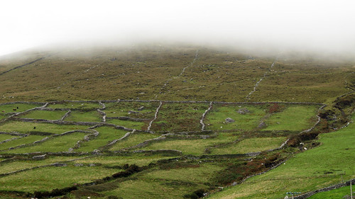 Land and stone fences in the fog on our Dingle Peninsula Drive, part of Ireland's Wild Atlantic Way