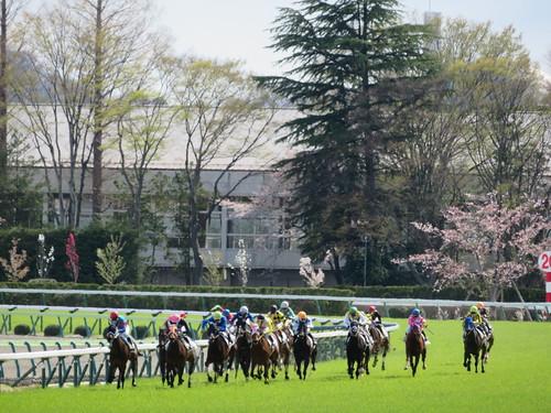 福島競馬場の芝1200mの直線