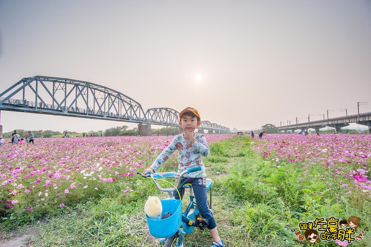 舊鐵橋(屏東端)花海-12