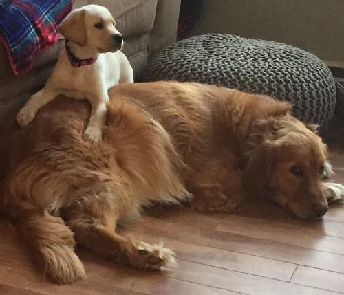 Lark with Friend
