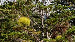 Wildlife & Flora, Patagonia, Chile