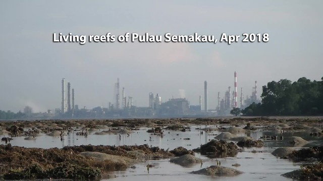 Living reefs at Pulau Semakau (South)