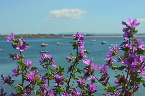 Vor den Booten im Hafen ein Blick auf die Blüten