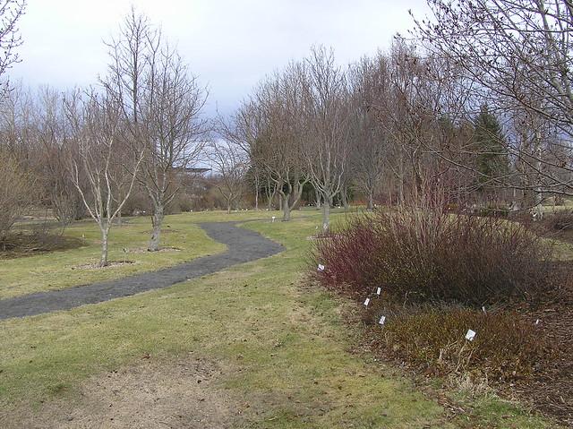 Reykjavik Botanical Garden