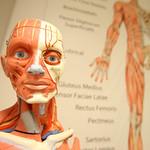 Anatomi Laboratuvarı 7