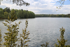 Wermsdorfer Wald