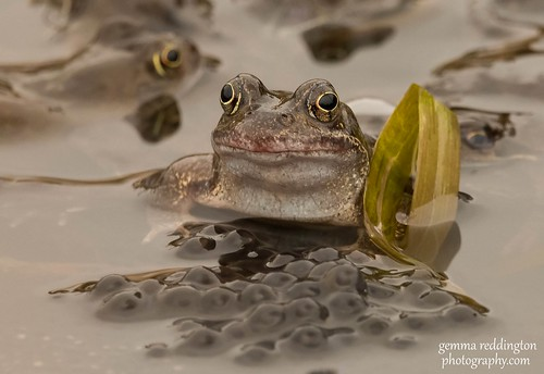 Close up Frog with spawn