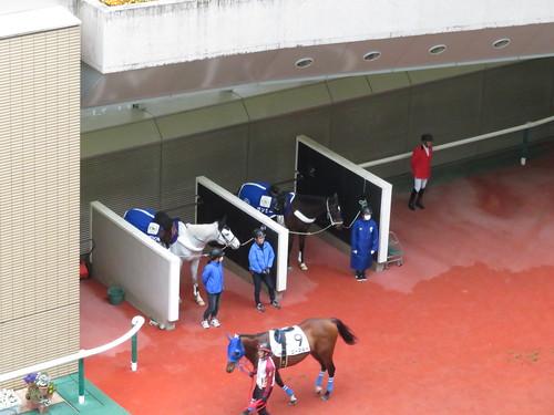 福島競馬場の誘導馬