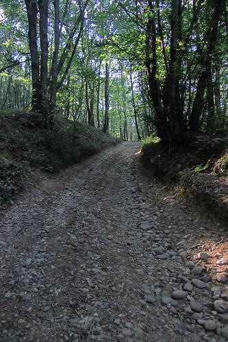 20120920 23 087 Jakobus Wald Weg Steine