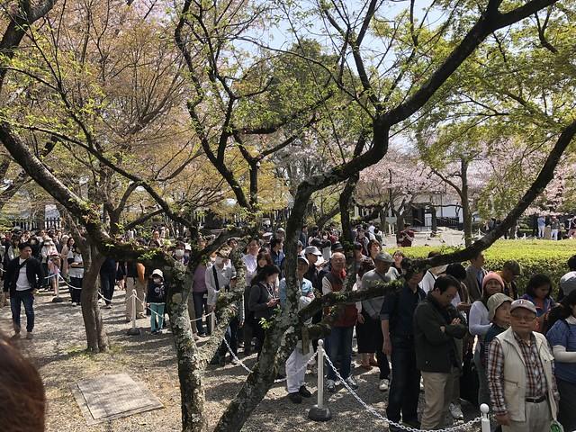犬山城天守閣への行列 IMG_0213