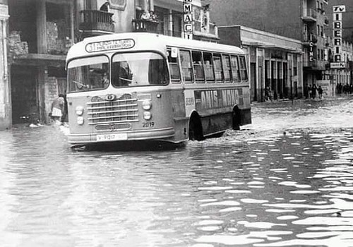 Autobús Nazar Malva-rosa