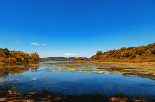 Summer Wetlands - Trempealeau National Wildlife Refuge