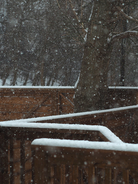 Snow falling on railing with tree in background