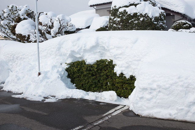 Fukui, Feb 2018 (The heaviest snow for the first time in 37 years filled up my town)