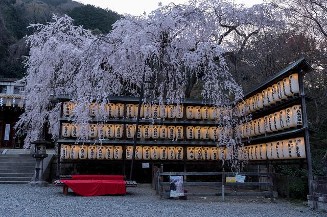 sakura2018 Oishi Jinja Shrine,Kyoto, RICOH PENTAX KP, HD PENTAX-DA 16-85mm F3.5-5.6 ED DC WR