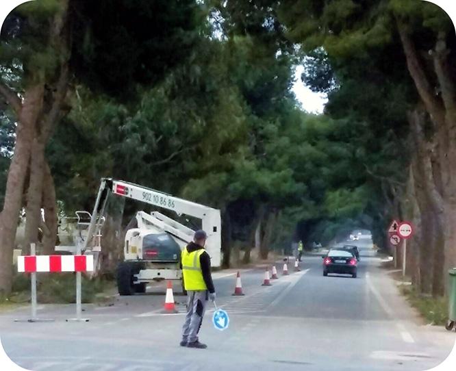 Comienza la poda de los más de 200 eucaliptos y pinos de la N-301