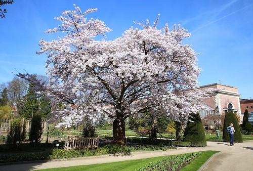 Een mooie lentedag in de Leuvense Kruidtuin (07/04/2018)