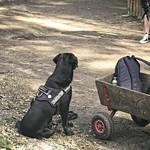 20180408-132459 - Hund - Wer ist hier lernresistent?