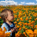 Baby in a Poppy Field
