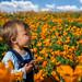 Baby in a Poppy Field