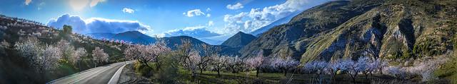 Photo:Almond Landscape By MarkC333