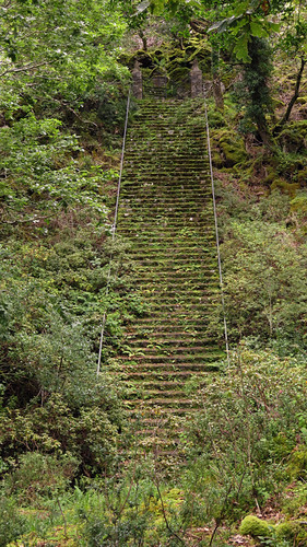 Overgrown stairs in Glenveagh National Park, Ireland