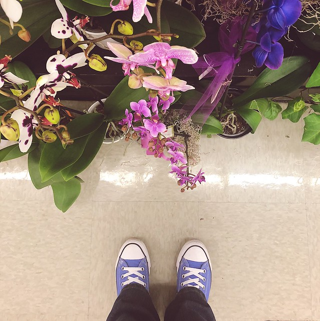 Where I stand amongst the flowers 🌸