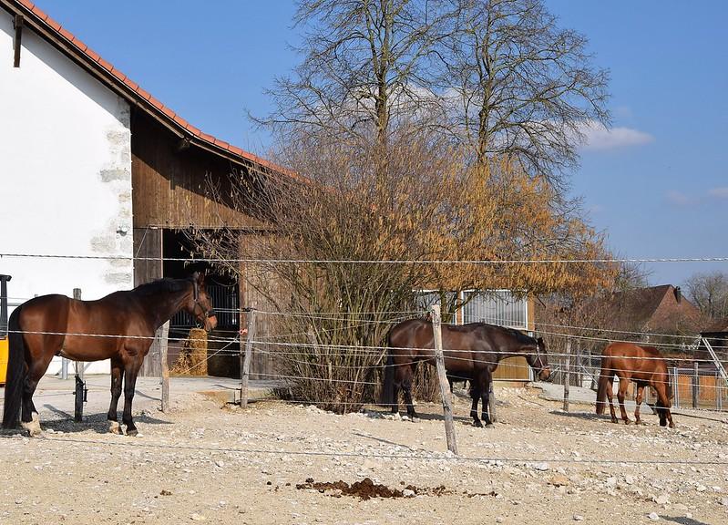 Horse 24.03 (2)