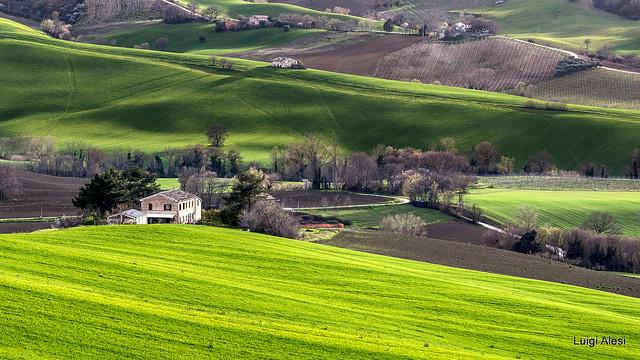 Campagna marchigiana - Staffolo (AN)