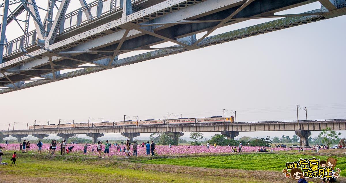 舊鐵橋(屏東端)花海-5